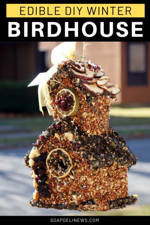 Edible birdhouse covered in seeds, nuts and dried fruit