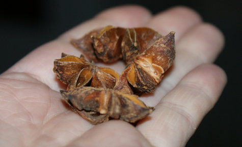 Certified Organic Fair Trade Whole Anise Star Pods from Mountain Rose Herbs