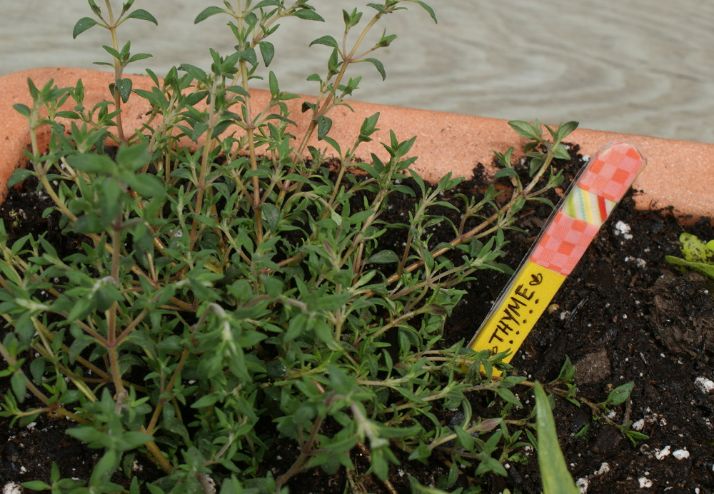 Homemade Thyme Garden Marker - Homemade Mother's Day Gift Idea Even the Kids Can Craft