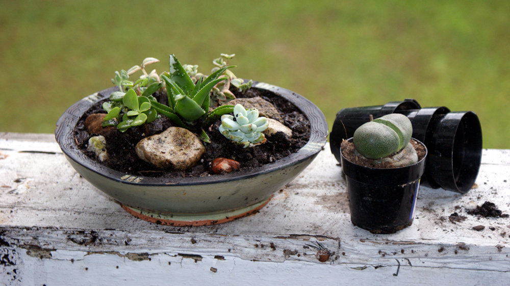 Last Minute Homemade Gift Idea - DIY Succulent Container Garden Arrangement
