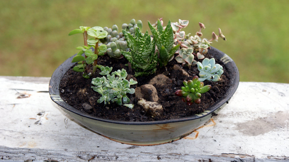 DIY Container Succulent Garden Last Minute Homemade Mothers Day