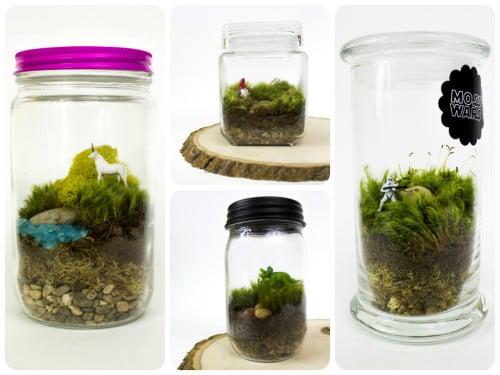 DIY Moss Terrariums from Jacie of Moss Love Terrariums