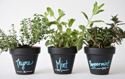 Easy DIY Chalkboard Plant Pots