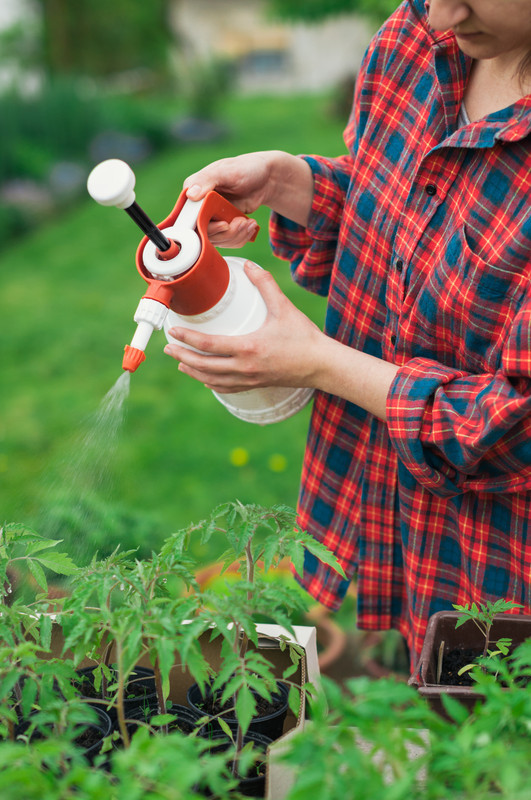 How to Use Neem Oil as a Natural Non-Toxic Garden Pesticide