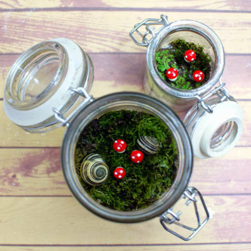 Making your own DIY terrarium is both fun and easy. Suited for any skill level, these cute terrariums make lovely home accents as well as thoughtful homemade gift ideas