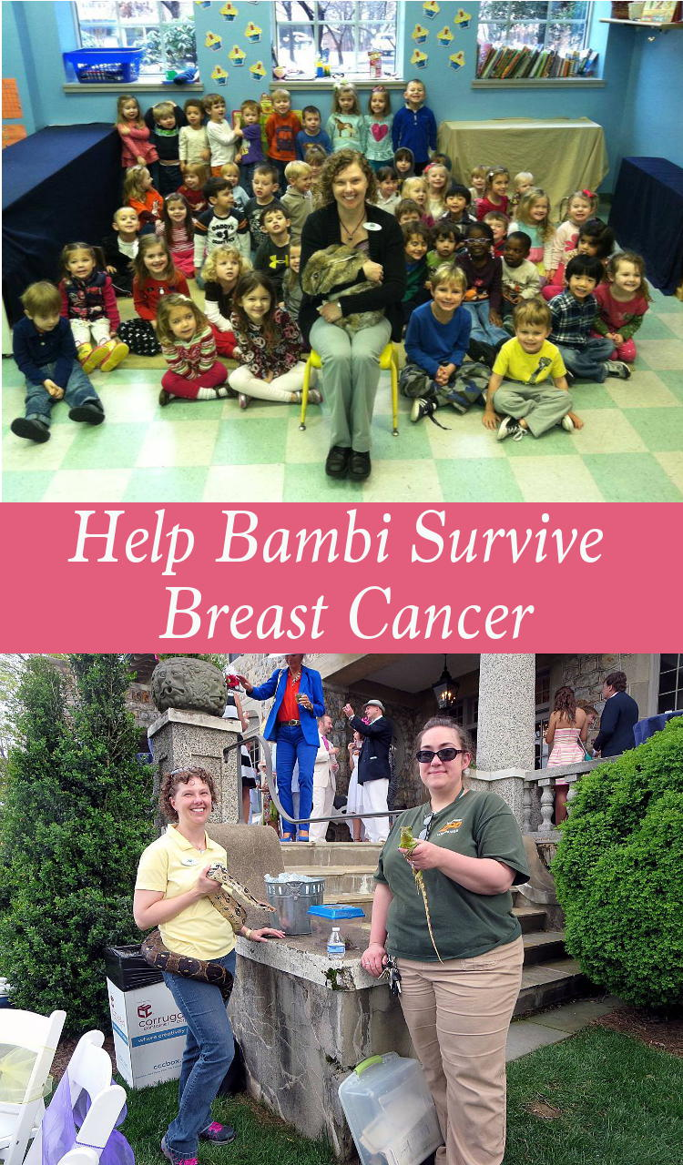 Last year my good friend, Bambi, was diagnosed with breast cancer. She had surgery just after Christmas and will be undergoing radiation in the next few weeks. I have set up a GoFundMe page here to help with her expenses. I hope you will take the time to read about her story and show your support. And please, don't forget to get your yearly mammogram!