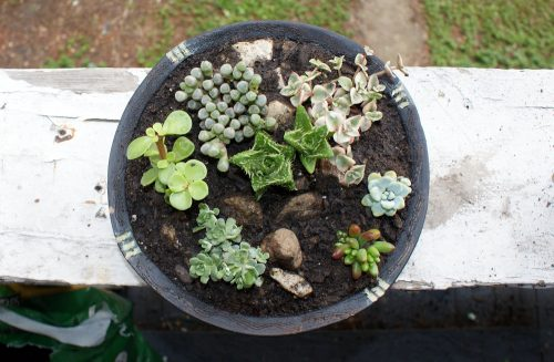 DIY Succulent Container Garden! Learn how to make your own DIY succulent container garden. Not only do these succulent container gardens make a beautiful home accent piece both indoors or out, but they are also extremely low maintenance! In fact, my succulents tend to fare best when I forget to water them.