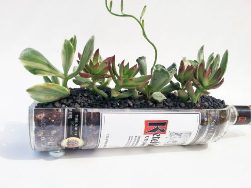 Upcycled Ketel One Vodka Succulent Planter from Looking Sharp Cactus