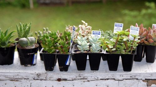 DIY Succulent Container Garden! Learn how to make your own DIY succulent container garden. Not only do these succulent container gardens make a beautiful home accent piece both indoors or out, but they are also extremely low maintenance!