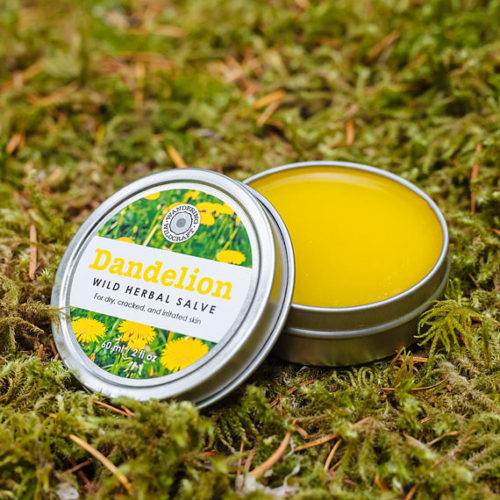 Wild Harvested Herbal Dandelion Salve from Wandering Wildcraft! Made with fresh, hand-picked dandelion blossoms, infused into organic sunflower oil to create a vitamin-rich salve that nourishes the skin. #salve #dandelionsalve #herbalsalve #naturalremedy