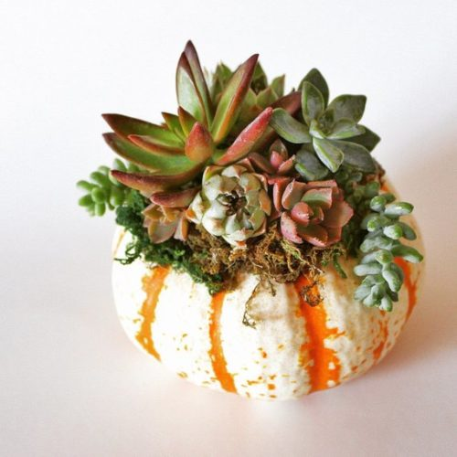 No carve pumpkin decorating ideas for fall. Live Fall Succulent Pumpkin Decor. If you love the look of real pumpkins and have a weakness for succulents, then this pumpkin centerpiece is a must for your sunny dining room. Available from PetalsPetiteSD, live succulents are arranged on a real pumpkin ready to be used as living decor in your home throughout fall.