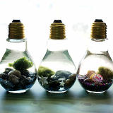 Learn how to make your owneasy Marimo moss ball DIY light bulb aquarium! These tiny aquariums make a great home for tiny Japanese Marimo moss balls! Not only is each DIY light bulb aquarium super cute, but they are perfectly sized to sit at your desk to keep you company! These are also great crafts to make and sell at craft fairs and farmers markets! Learn how to make yours now!