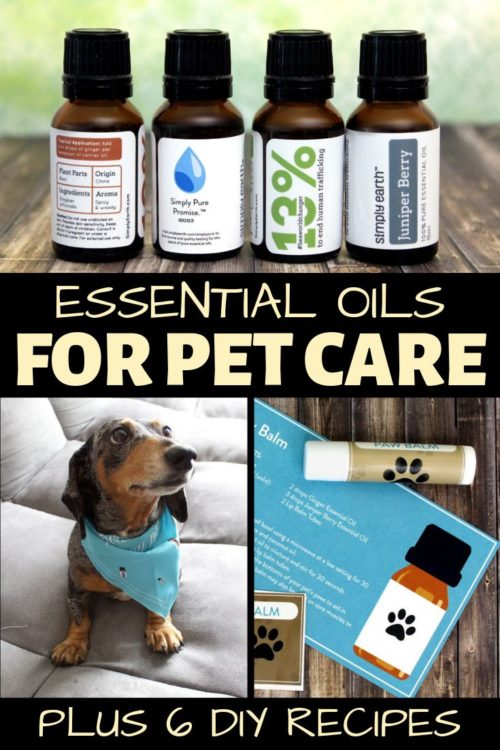 Essential Oils for Pets (Recipes for Dog Fleas, Itchy Skin & More!) Your pets are your best friends. So taking care of them is naturally at the top of your list. Learn how to use essential oils for pets with six easy essential oil recipes for your furry friends. Learn how to use essential oils for dog fleas and itchy skin. Plus quick, simple recipes for a pet paw balm, a fur and skin conditioner, a DIY pet odor eliminator spray and an anti-anxiety essential oil diffuser blend.