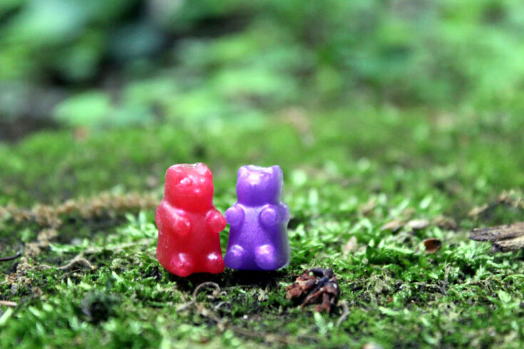 gummy bear soaps outdoor hanging out in the moss