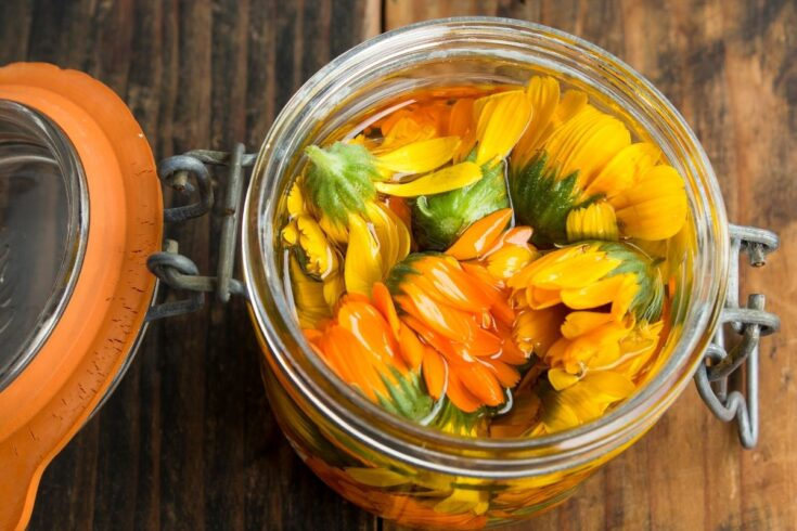 How to make calendula infused oil. Learn about the natural skin care benefits of calendula and how to make calendula oil using both the warm infusion method and the solar infusion method. Along with ways to use calendula infused oil including a homemade calendula soap recipe for a cold process soap you can make from scratch for problem skin. Calendula oil is perfect for acne prone skin, dry skin and eczema and can help promote skin healing as well as fight the signs of aging.